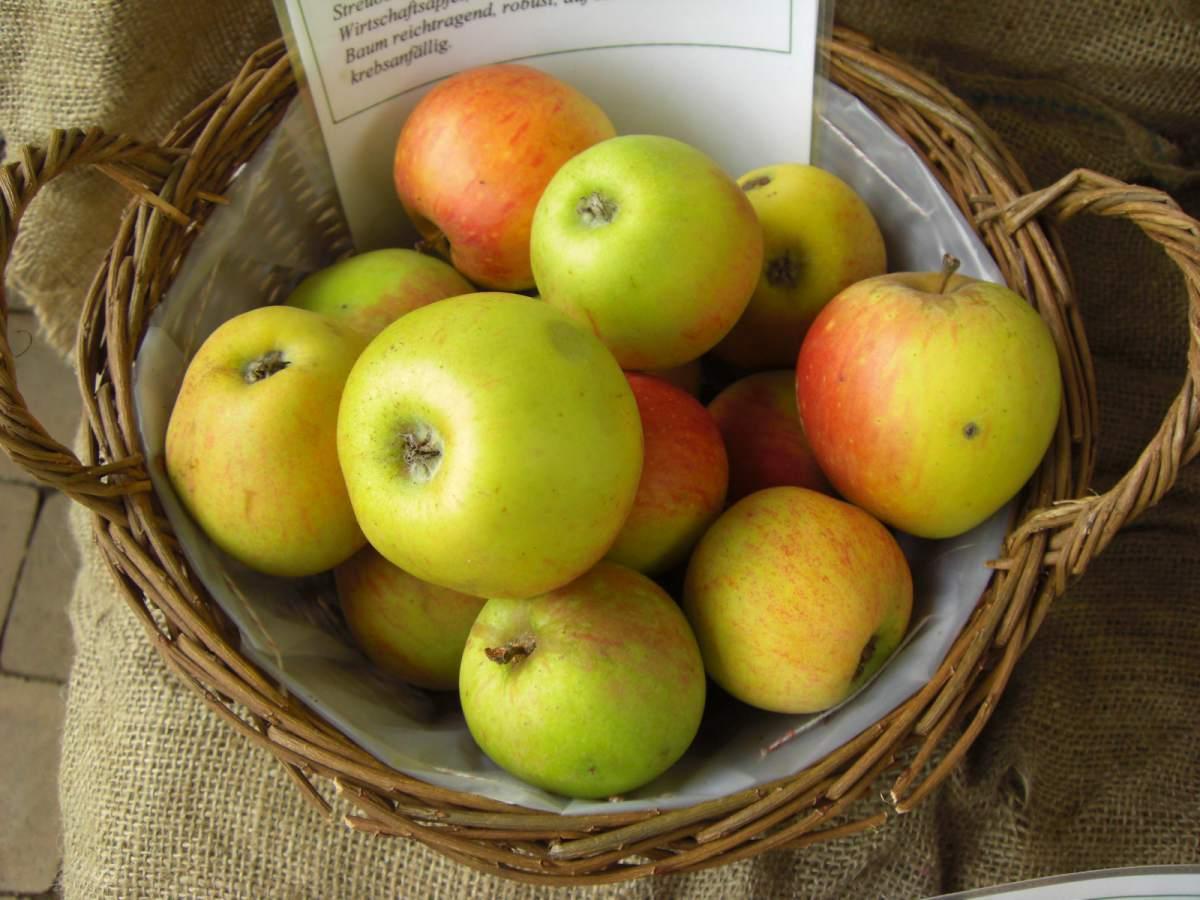 Deswegen sollte man ihn vor dem Verzehr gründlich gewaschen, aber nicht schälen. Ich empfehle die Früchte nur im Bioladen oder von Streuobstwiesen zu kaufen, weil diese deutlich weniger mit Pestiziden und chemischen Düngemitteln belastet sind.